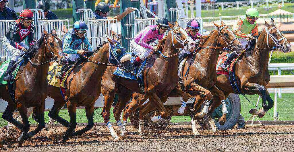 horse race starting